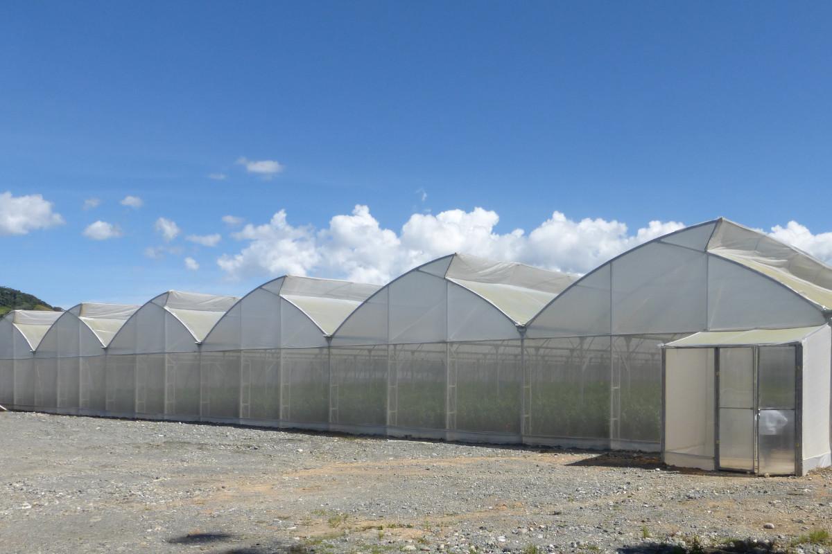 Multispan greenhouse for tropical latitudes