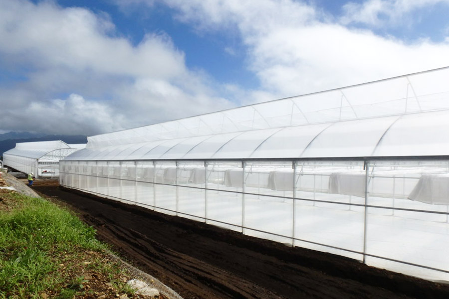 Building site in Tahiti, covered in insect-proof net