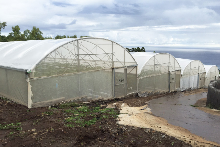Growing tomato and cucumber through hydroponics on coconut fibers