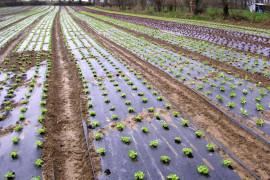 Salad mulching film