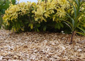 Les différents types de paillage : le paillis organique, minéral et les toiles de paillage