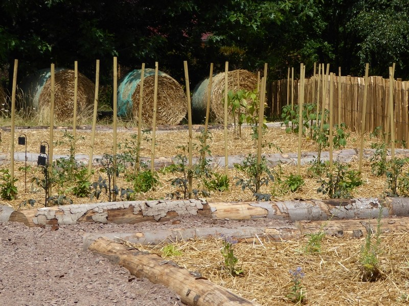 paille hivernage plante