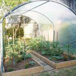 Quelle serre tunnel pour les tomates ?
