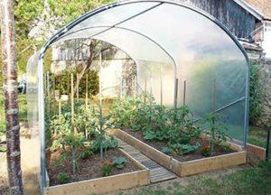 serre tunnel à tomates