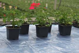 Equipements de serre de jardin