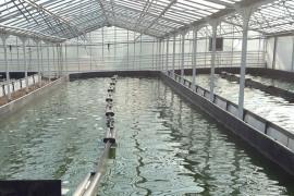 Bassins de spiruline