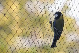 Filets de volière et anti-oiseaux